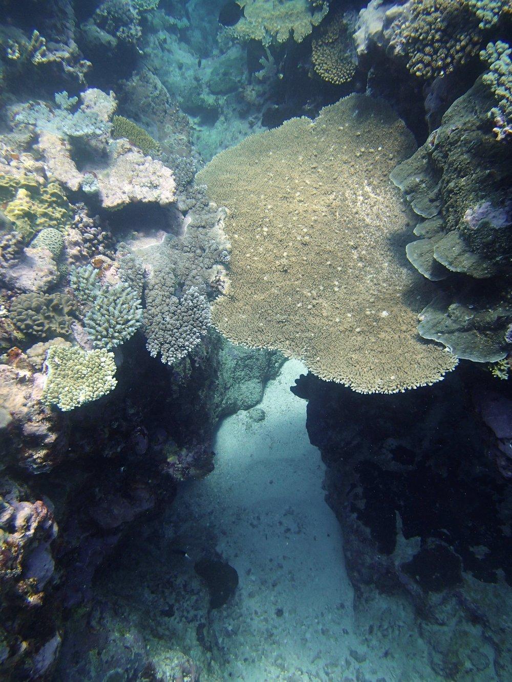 coral bridge.jpg