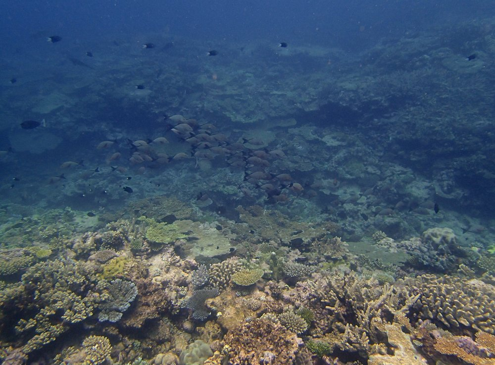 fish at Surprise Atoll.jpg