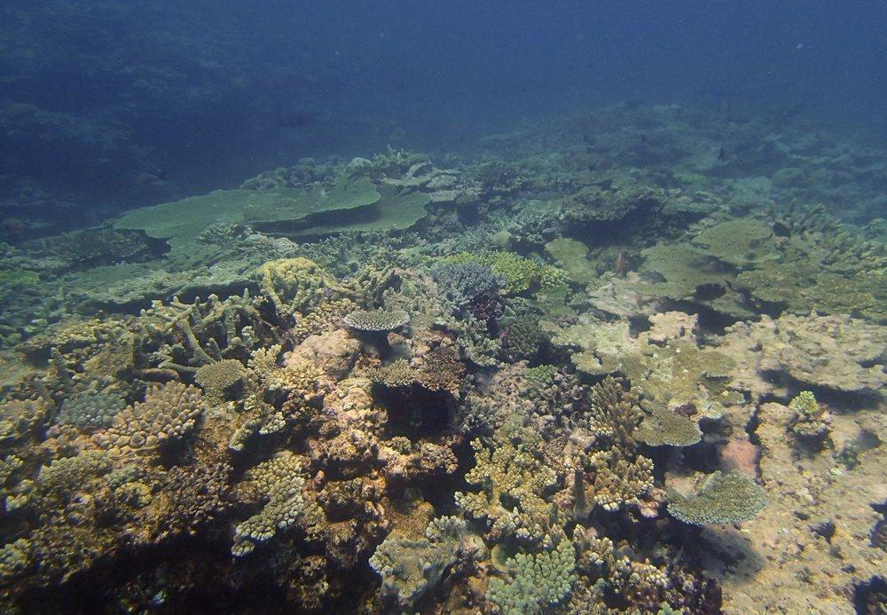 Surprise Atoll 11-19-13.jpg