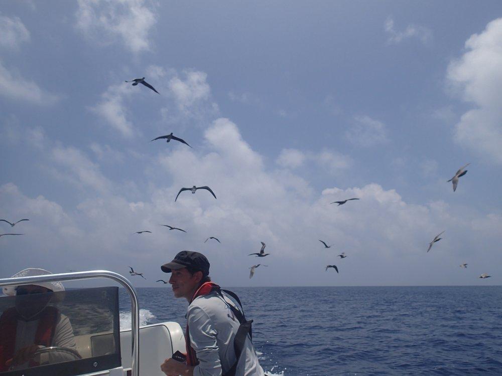 frigate birds at Surprise Atoll.jpg