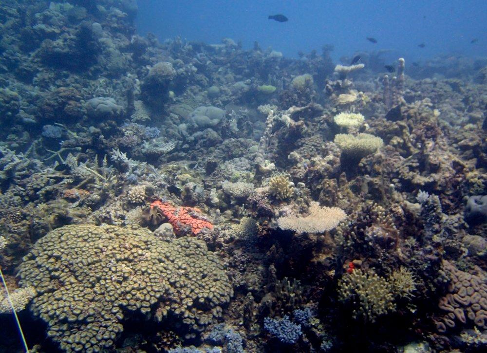 lagoon site.jpg