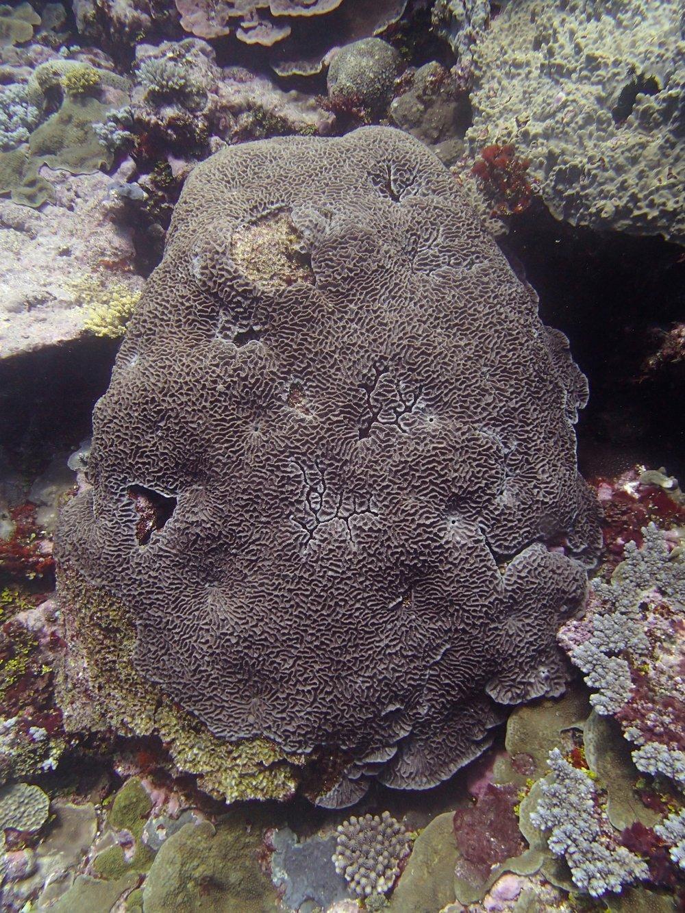 mystery coral.jpg