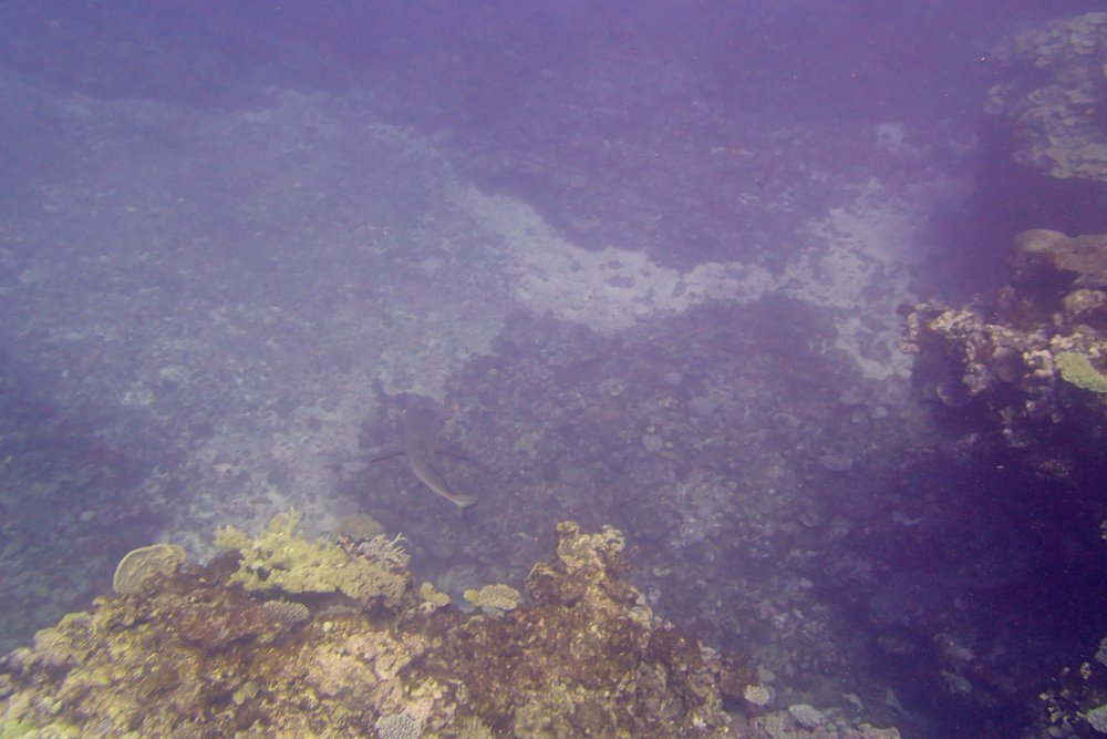 shark at NCSU67.jpg