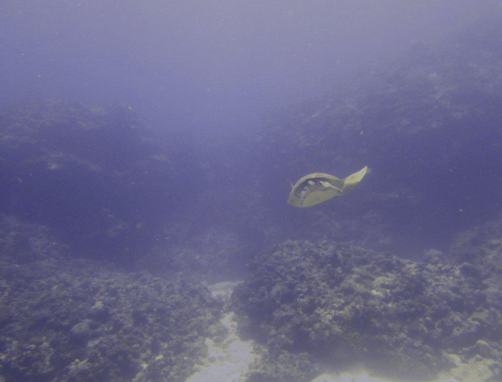 retreating turtle.jpg