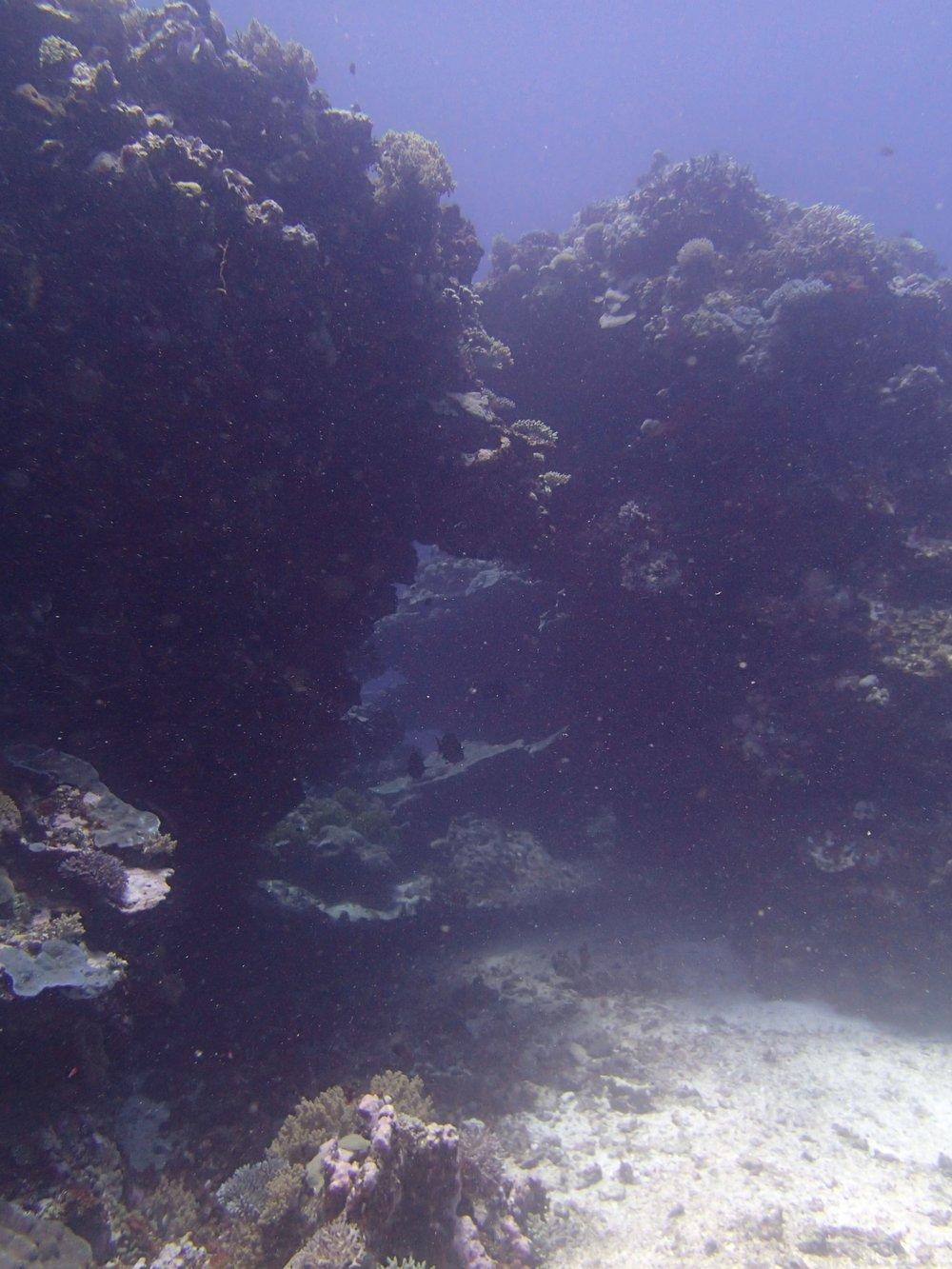 NCSU68 swim-through.jpg