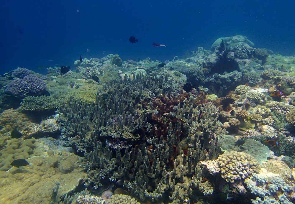 sea mount dive.jpg