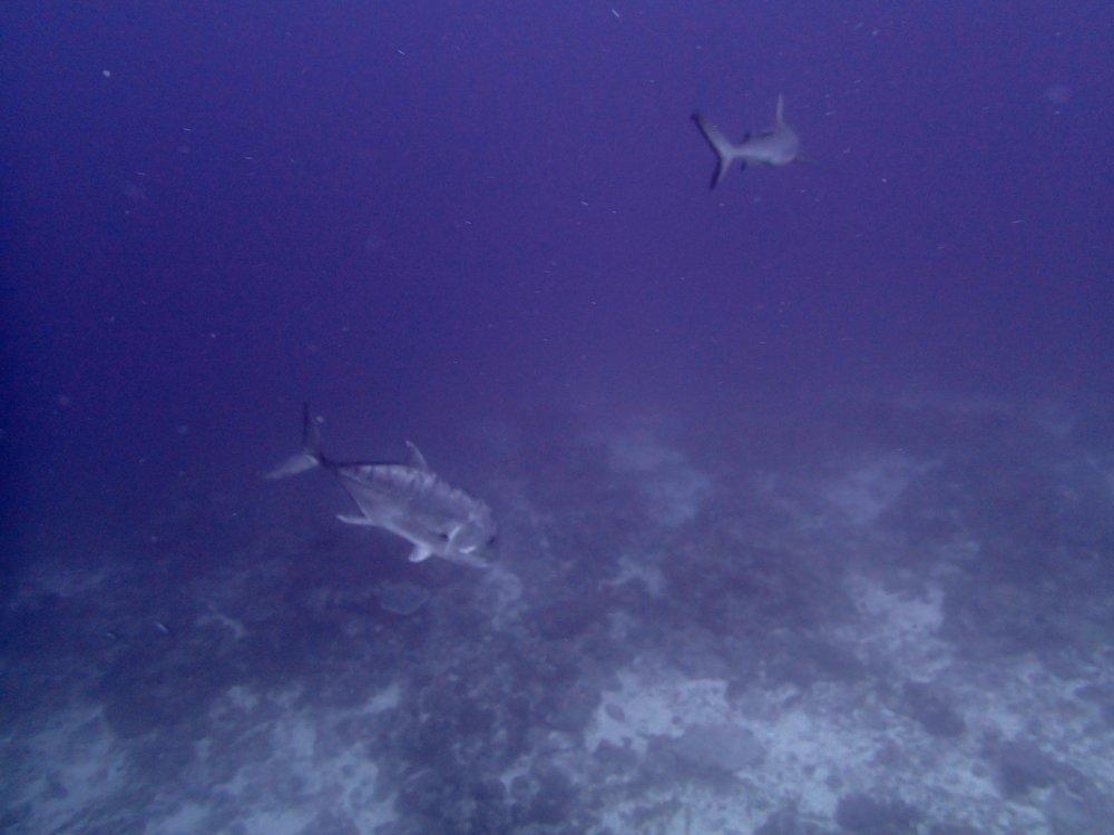 jack and shark.jpg