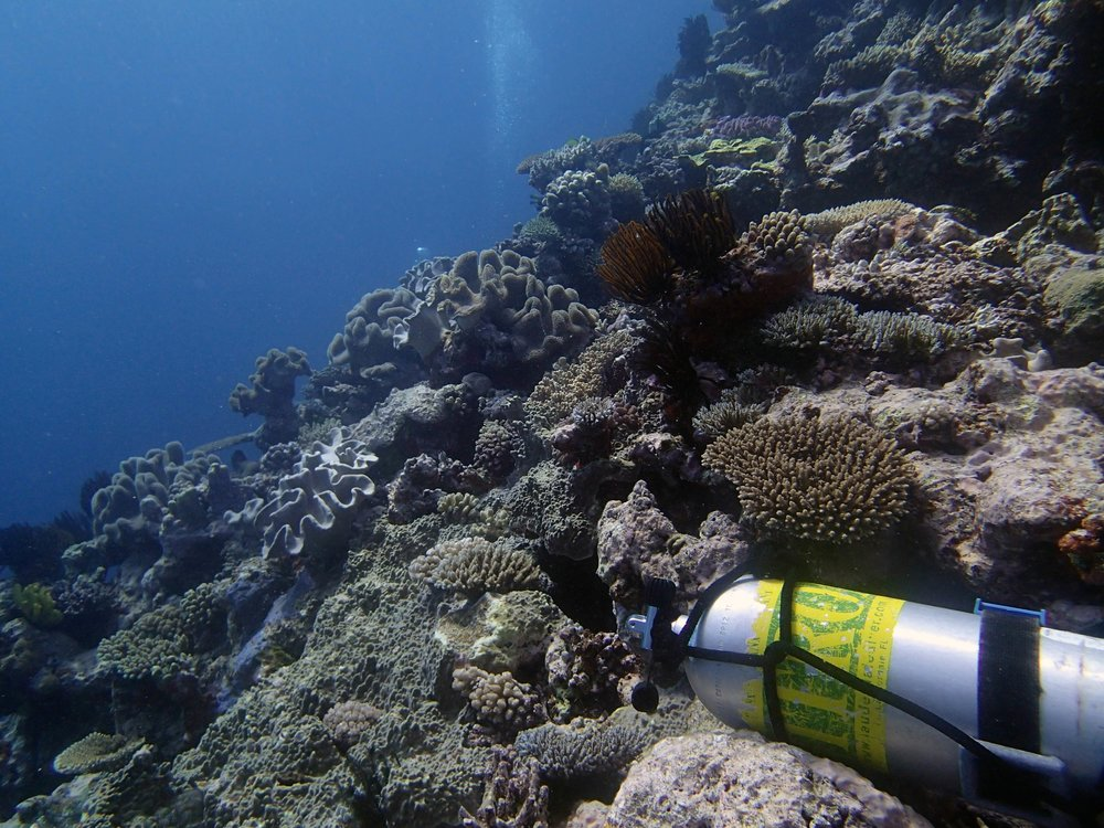 last dive at Surprise Atoll.jpg