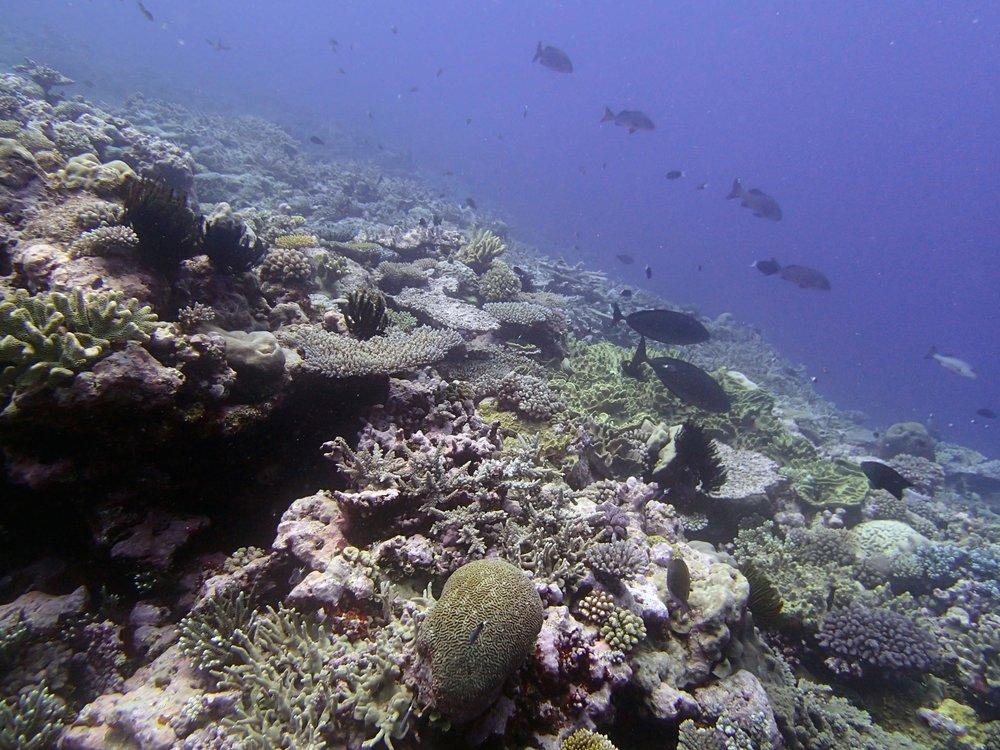 Portail Atoll 11-23-13.jpg