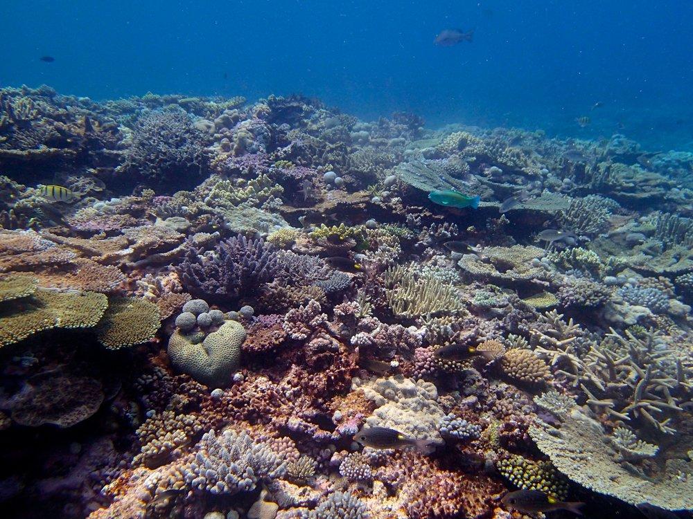 good shallows shot.jpg