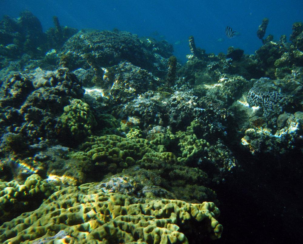 2-15-11 snorkelling.jpg