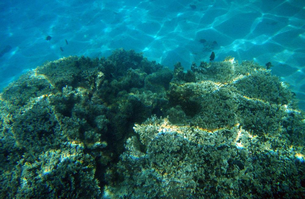 reef's edge.jpg