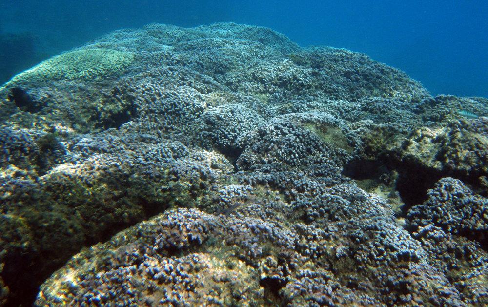 LTER fringe reef 1.jpg