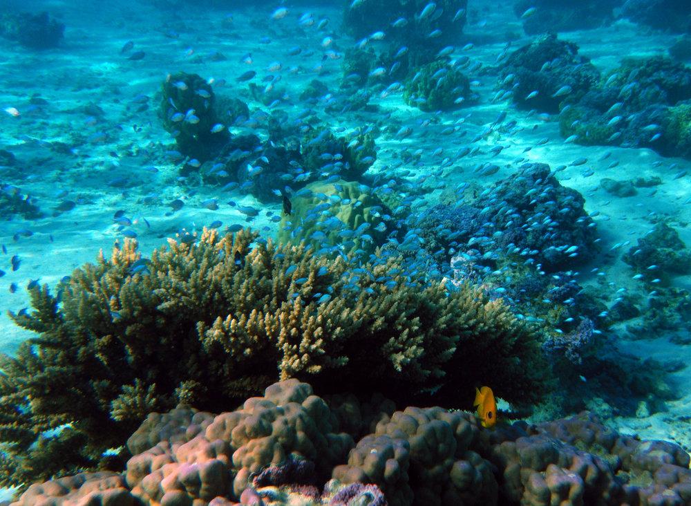 Temae snorkel trip 2-19-11.jpg
