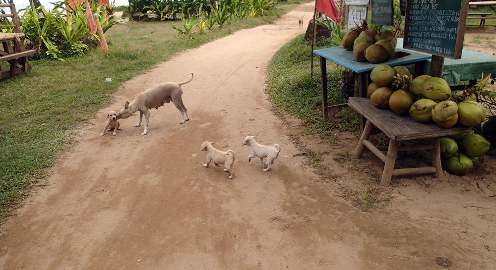 street puppies.jpg