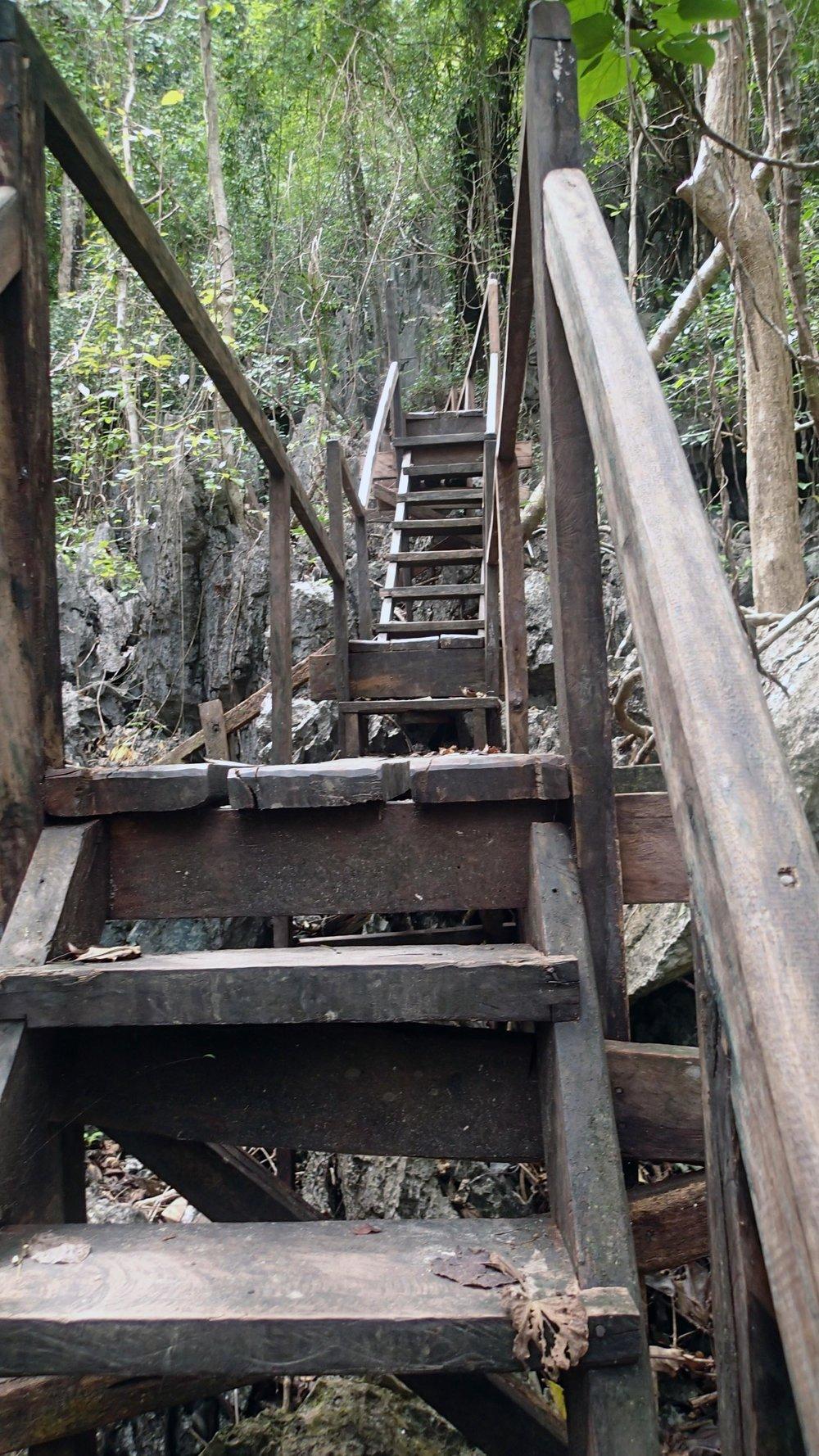 jungle trail 1-18-17.jpg