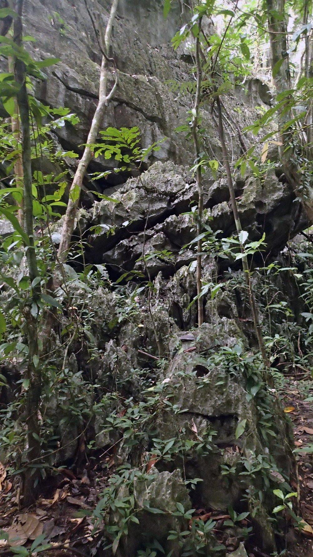 karst forest.jpg