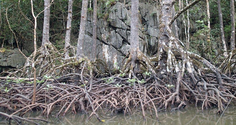 mangrove+karst.jpg