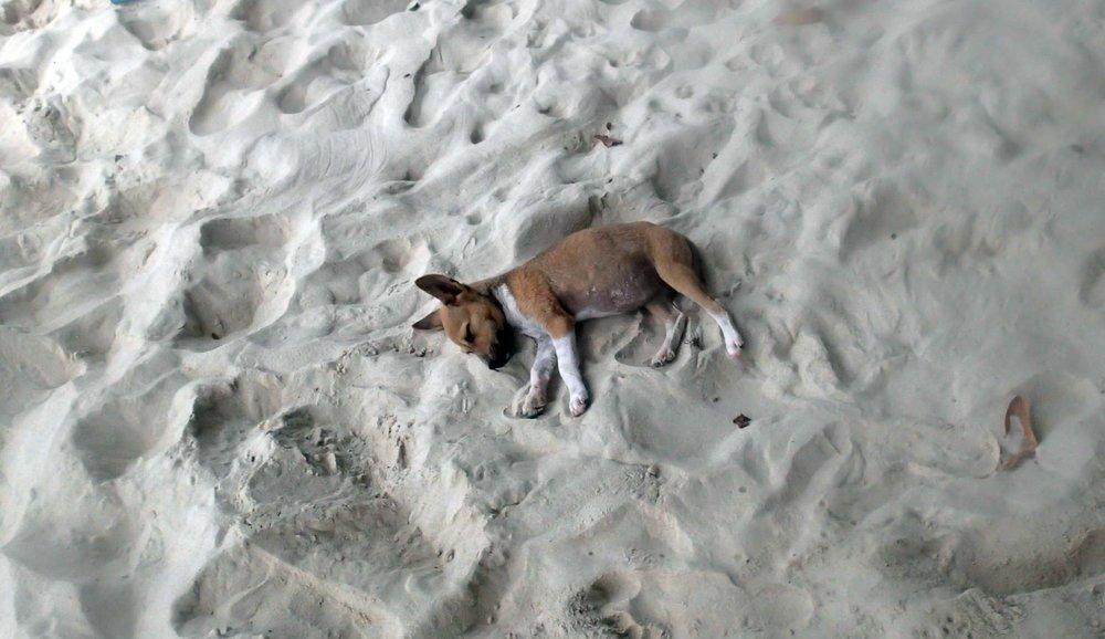 lazy baby.jpg