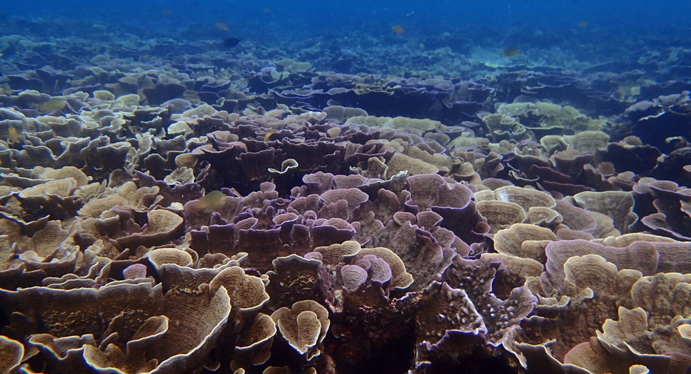 coral paradise.jpg