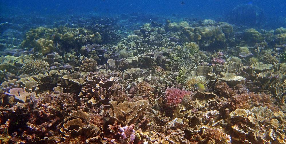 high coral cover-Palawan.jpg