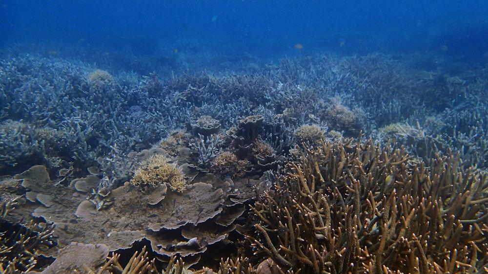 best coral in Port Barton.jpg