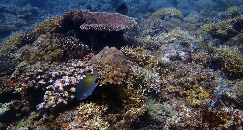 good reef shot.jpg