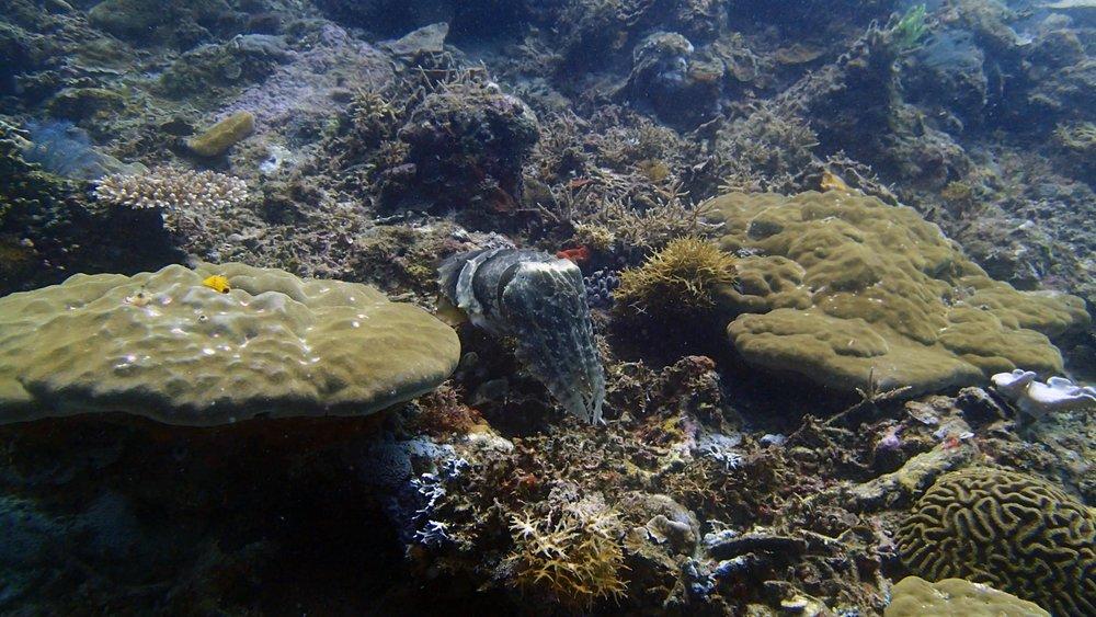 good cuttlefish shot.jpg