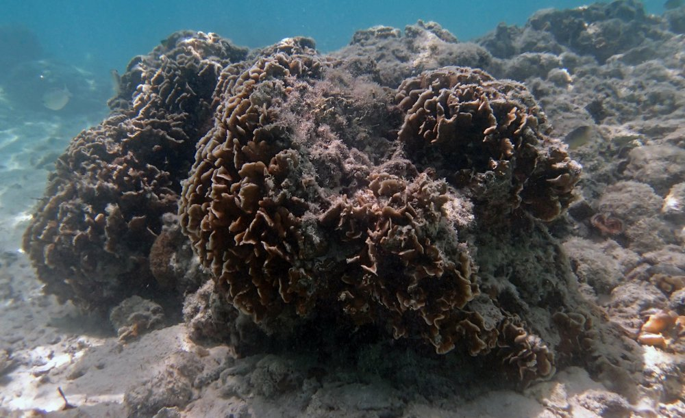 corals of Twin Lagoon.jpg