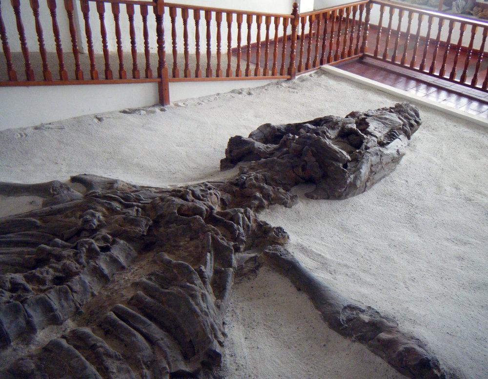 ichthyosaur at Fossil Musem.jpg
