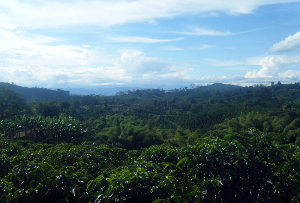 Coffee country Colombia.jpg