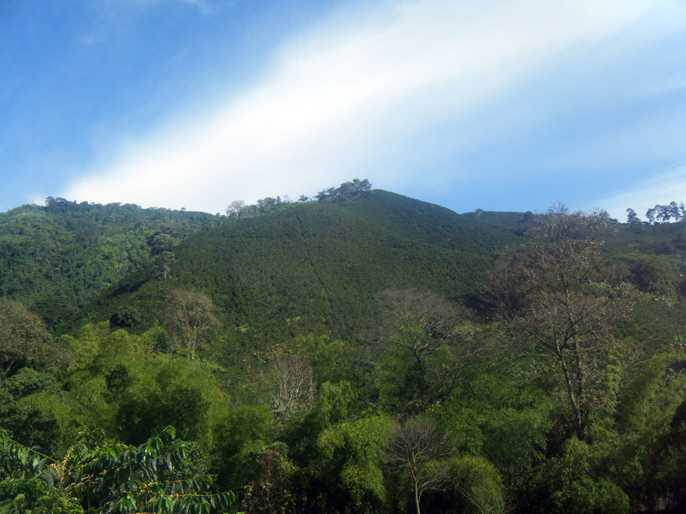 coffee farm 10-21-12.jpg