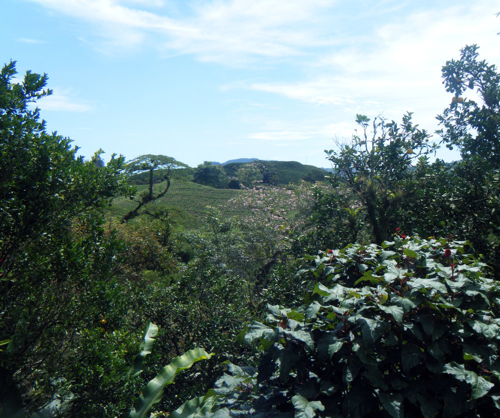 Hacienda Guayabal Zona Cafetera.jpg