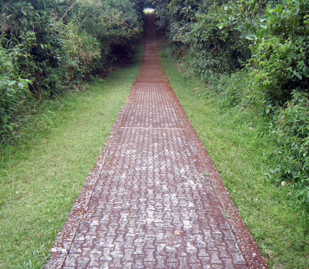 path through the jungle.jpg