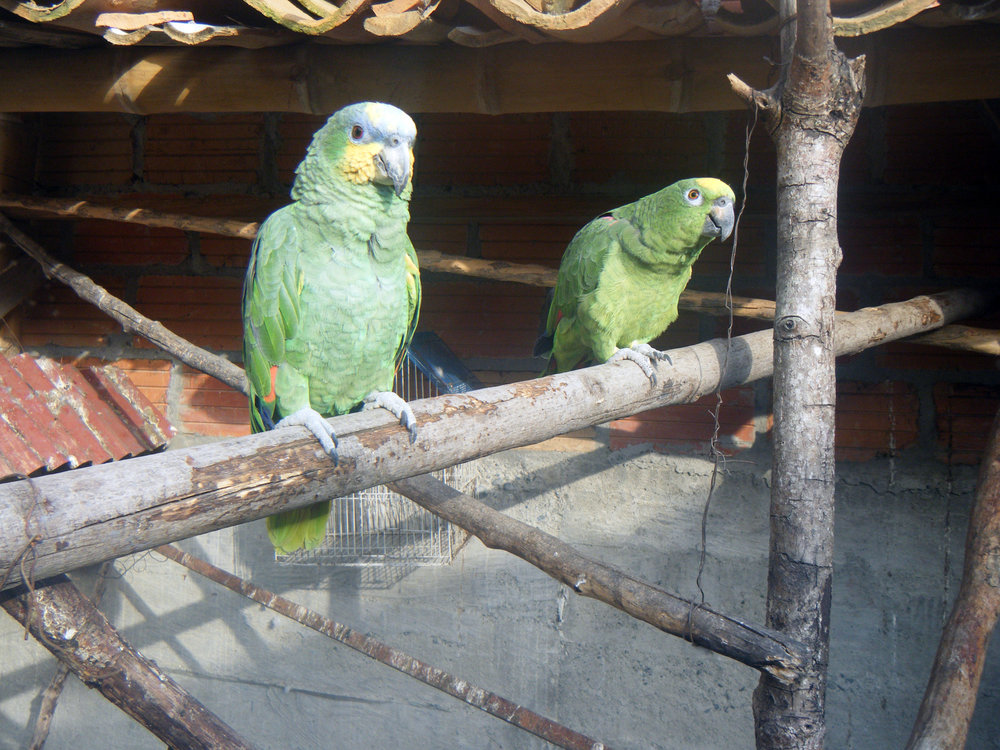 friendly parrots.jpg