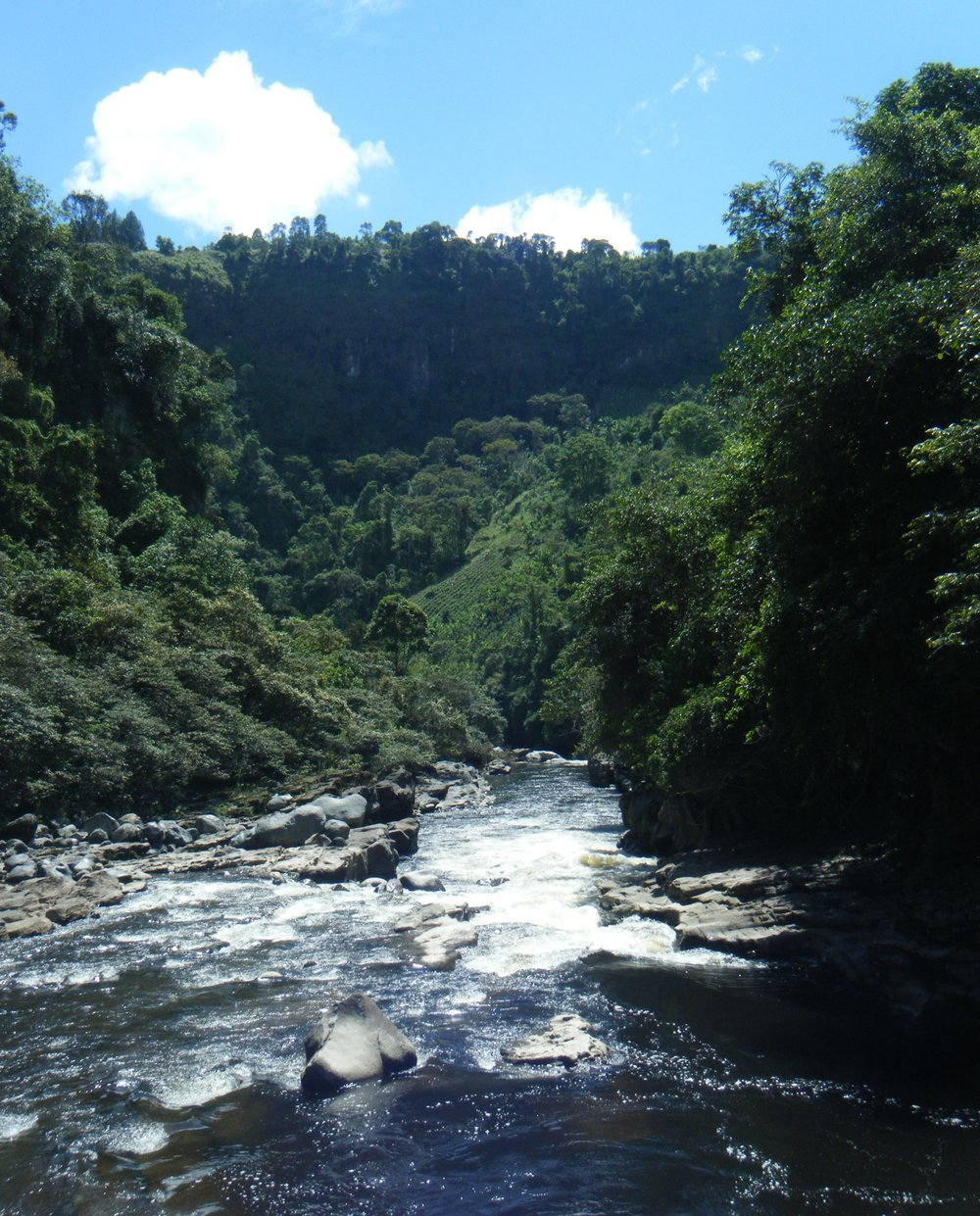 Rio Magdalena 2.jpg