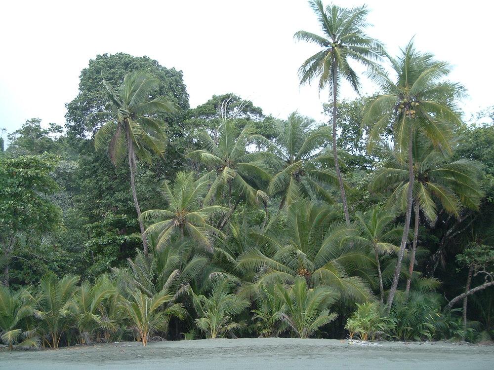 costaricapics 075.jpg