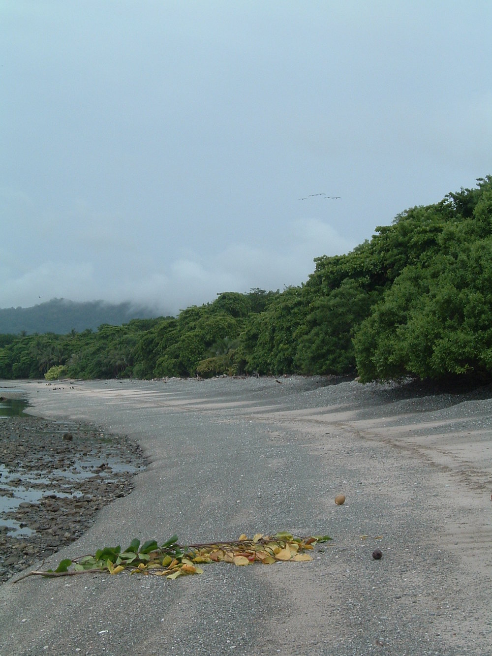 costaricapics 049.jpg