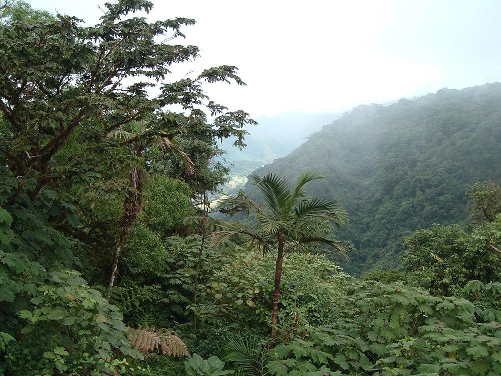 costaricapics 033.jpg