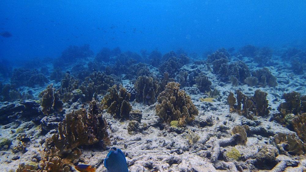 fire coral reef.jpg