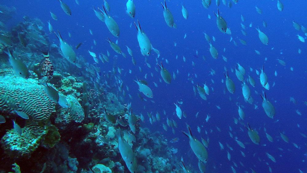 fish rain 2.jpg
