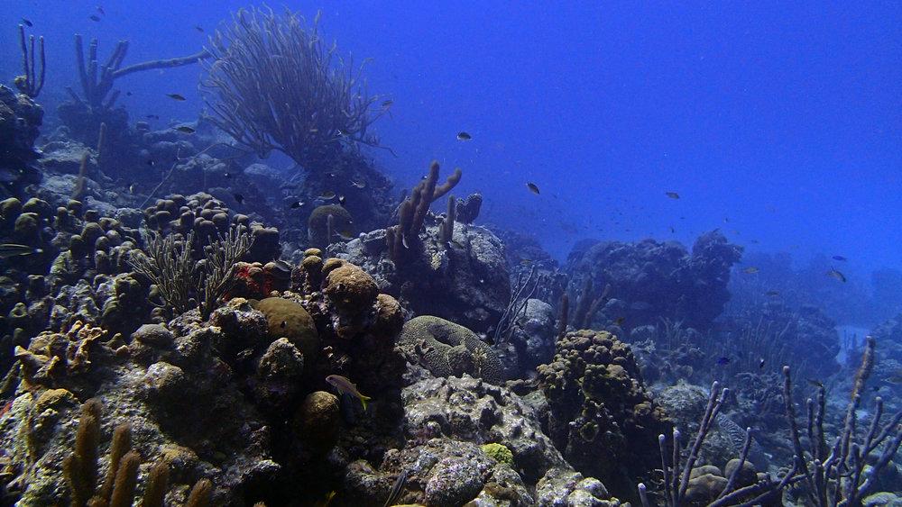 1st reef.jpg