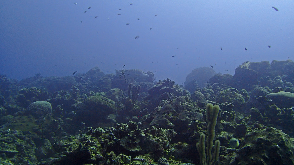 crest of second-deep reef.jpg
