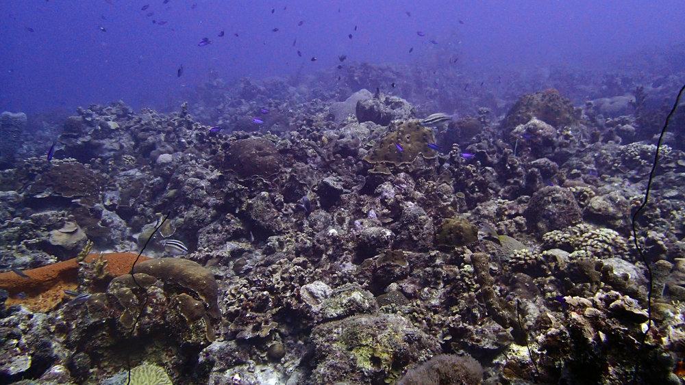 2nd reef.jpg