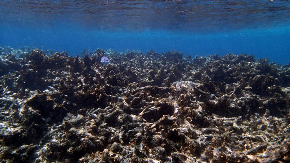 dead reef.jpg