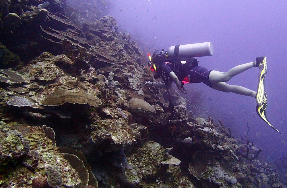 deep reef.jpg