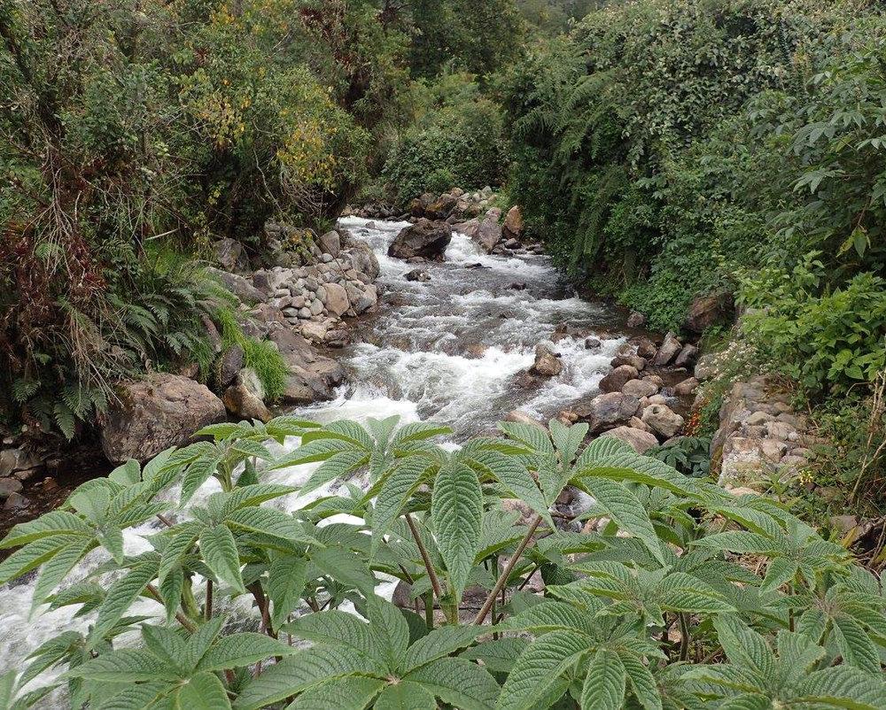 jungle hot springs.jpg