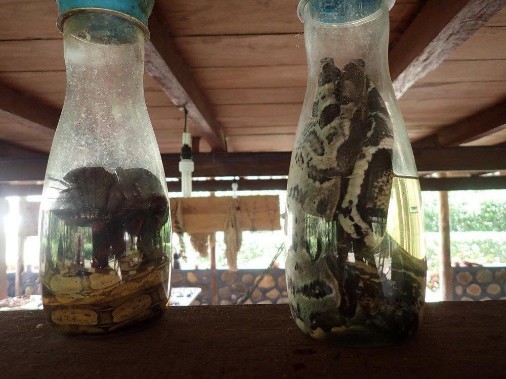 pickled snakes.jpg