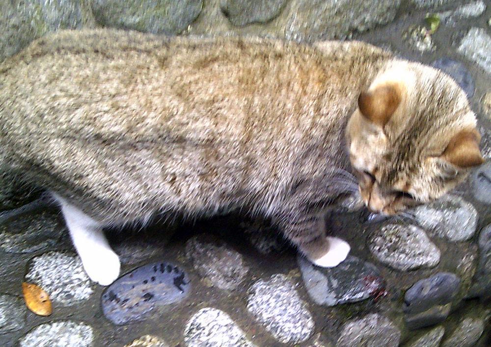 cute kitty.jpg