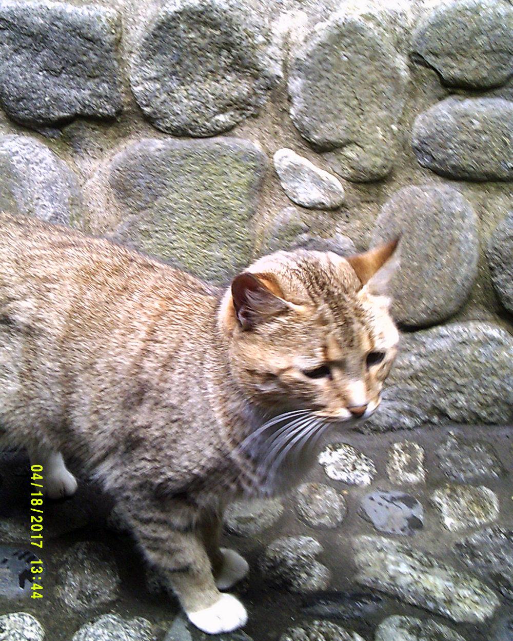 friendly cat.jpg
